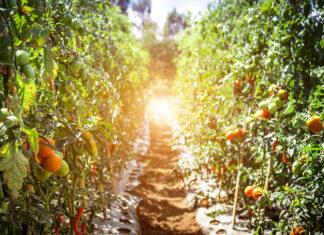 Czym powinny charakteryzować się skrzynie na jabłka